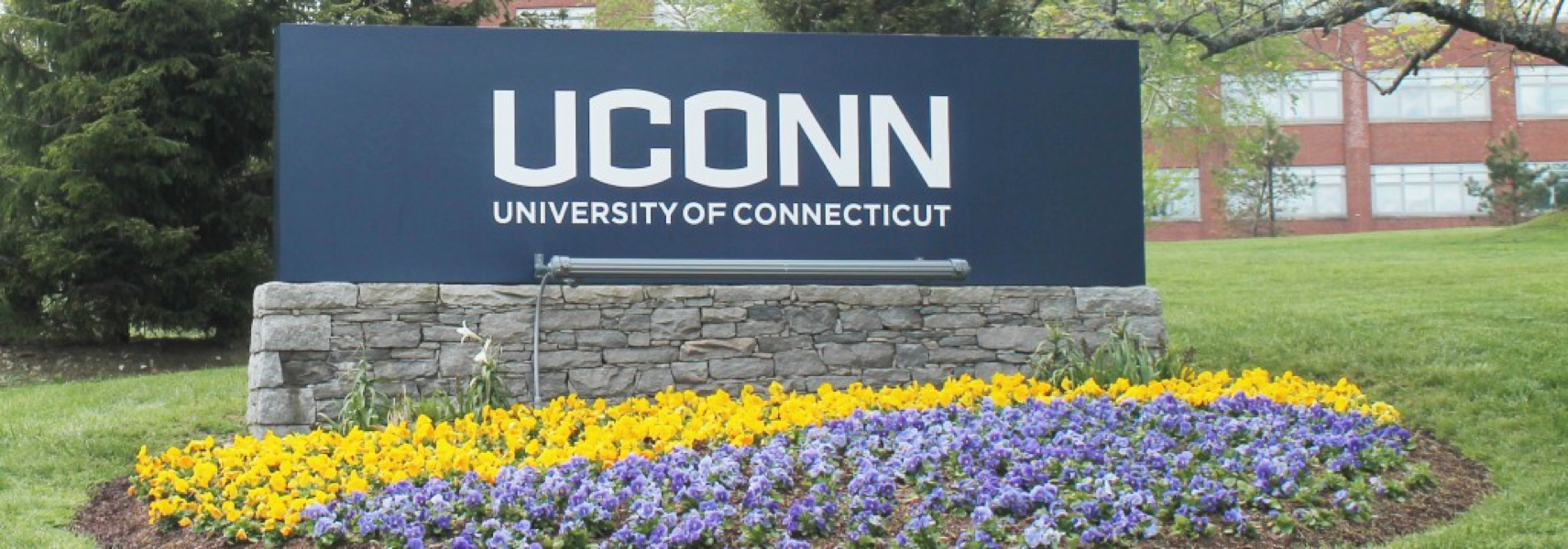 College essay help connecticut   Good length college admissions essay
